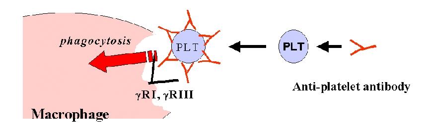 Immune Thrombocytopenia Treatment